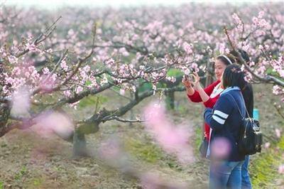 桃花节这面旗帜,浦东将继续高举,关键是做深内容内涵.